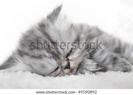 Sleeping small kitten