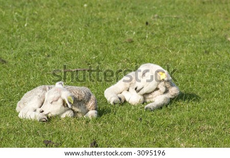 Sleeping together - stock photo