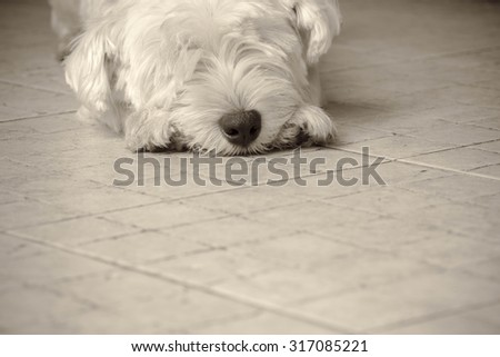 Sleeping white dog on floor with Vintage style
