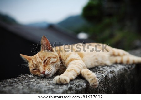 sleeping yellow cat - stock photo