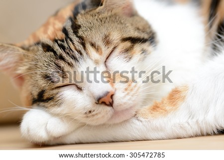 Sleepy cat