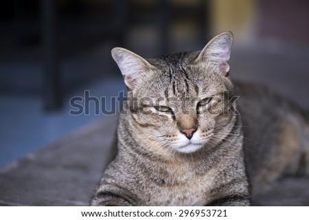 Sleepy cat laying down on floor - stock photo