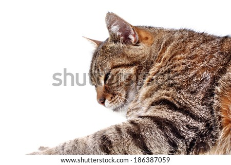 Sleepy cat lying on a white background - stock photo