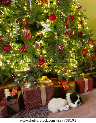 Sleepy dog lying under the decorated christmas tree