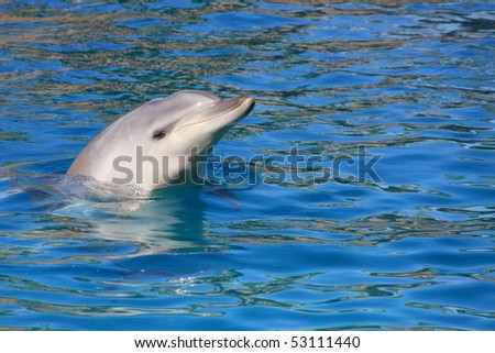 sleepy dolphin looking out of water
