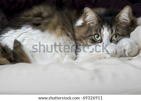 Sleepy kitten looking up - stock photo