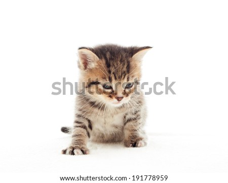 Sleepy kitten on a white bedspread