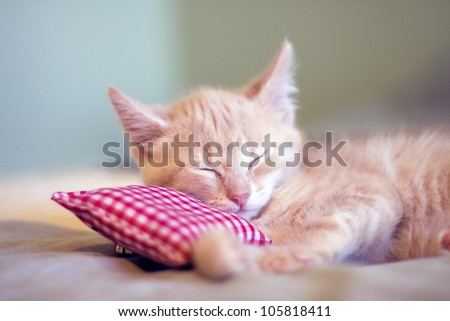 Sleepy Little Kitty - stock photo