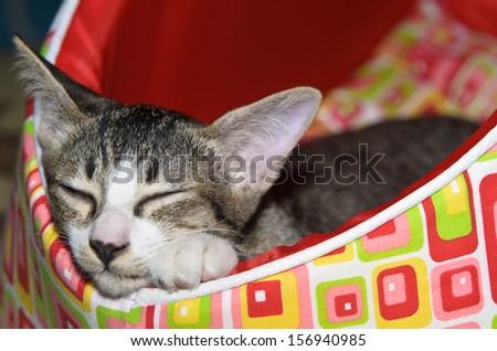 Sleepy Tabby on Red Cat Bed - stock photo