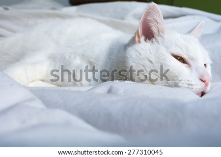 Sleepy white cat laying on bed with white sheets. - stock photo