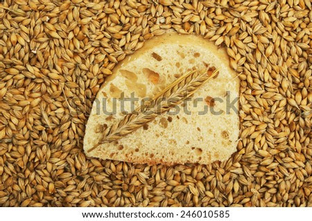 Slice of ciabatta bread with a wheat ear surrounded by wheat grains - stock photo