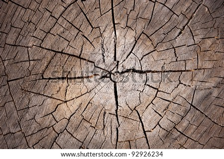 slice of dry wood timber natural background - stock photo