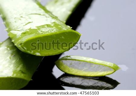 Sliced aloe leaf with reflection - stock photo