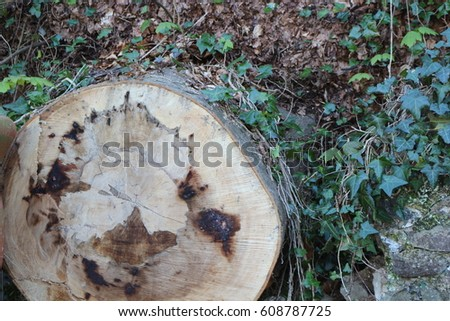Sliced tree trunk