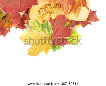 Slices of orange pumpkin in a pile of maple leaves as a autumn Halloween background composition, isolated over the white background - stock photo
