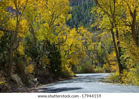 Slightly curve road with yellow leaves