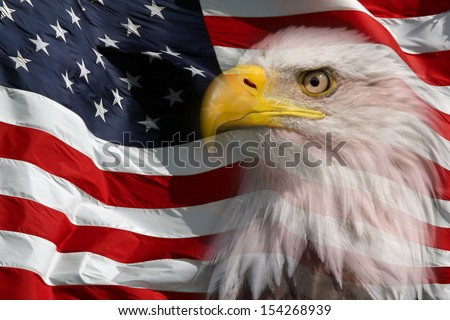 Slightly transparent North American Bald Eagle on American flag  - stock photo
