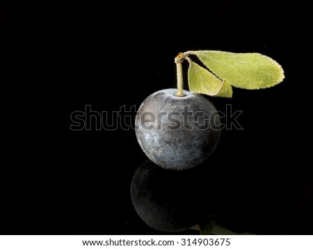 Sloe,Prunus spinosa - blackthorn on a black background  - stock photo