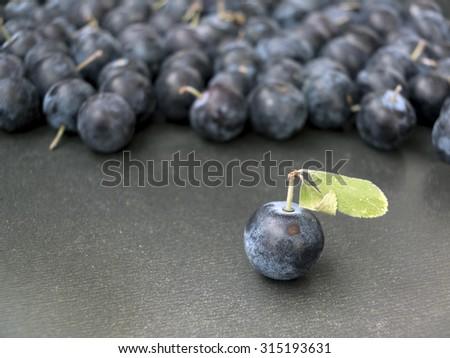 Sloe,Prunus spinosa - blackthorn on a grey background 1 - stock photo