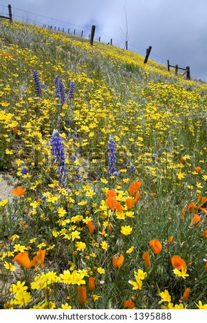 Slope of the hill covered with colorful spring flowers and the old fence in the background. - stock photo