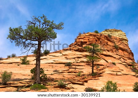 Slopes of Zion canyon. Utah. USA.