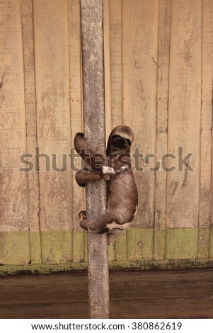 sloth - stock photo