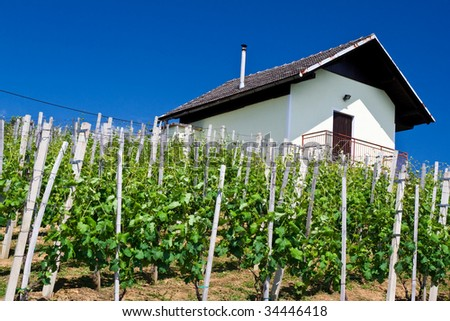 Slovenia vineyard in summer with bight blue sky and little hut as background - stock photo
