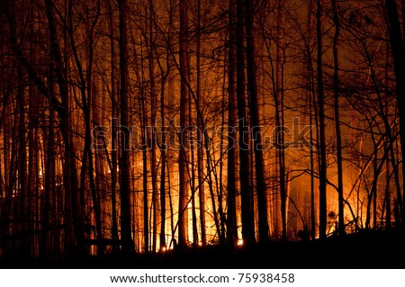 Slow burn forest fire at night. - stock photo