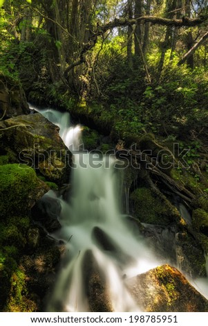 Slow motion waterfall running over moss in the Wasatch national forest in Utah USA/ A Bit of Heaven