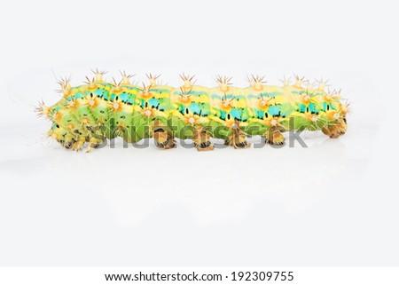 Slug caterpillar on white background. - stock photo