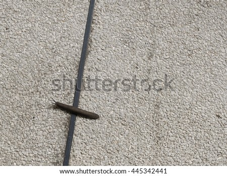 Slug crawls on the rough surface; reaching and passing the line. Concept of attempt, win, effort, victory, success, triumph, never give up. Copy space on the right. - stock photo