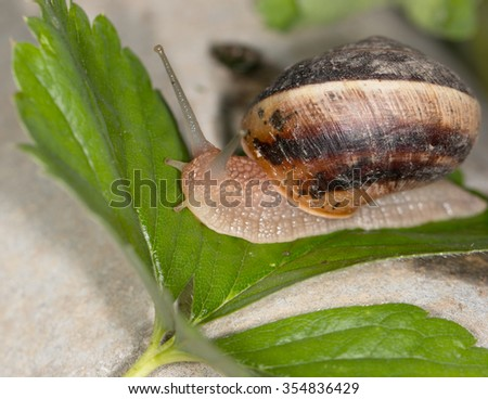 Slug on a leaf - stock photo
