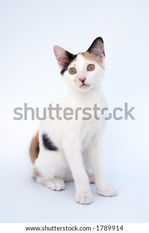 small adorable cat