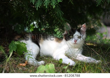 Small adorable kitten lying under the bush - stock photo