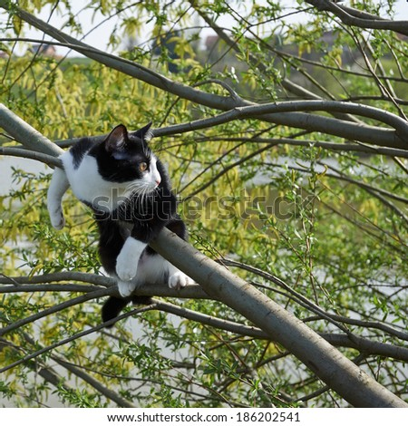 Small adorable kitten on the tree - stock photo