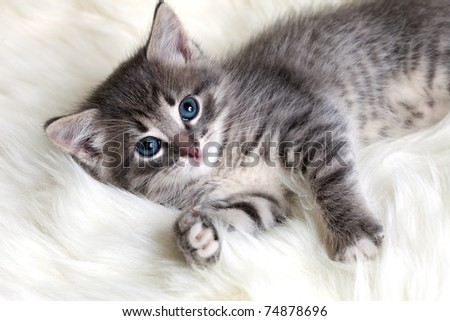 small and beautiful kitten - stock photo