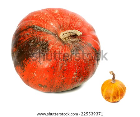 Small and big ripe pumpkins. Isolated on white background. - stock photo