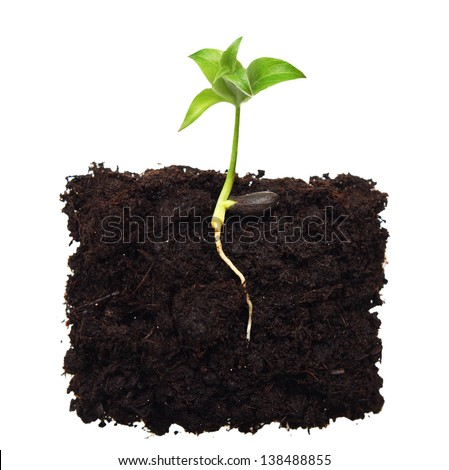 Small apple tree in ground with root. - stock photo
