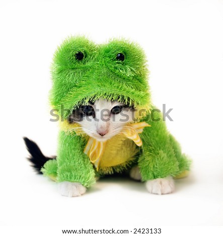 small baby kitten dressed up in Frog Costume looking mad isolated on a white background - stock photo