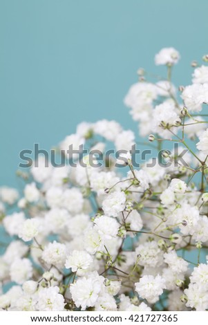 Small baby's-breath flowers - stock photo
