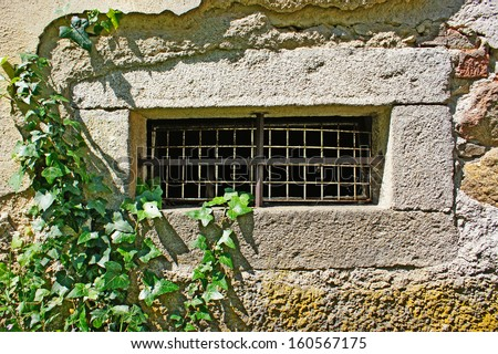 small barred window in a grunge wall overgrown with ivy                      - stock photo