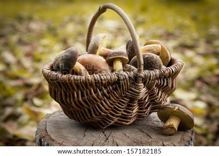 Small basket with autumn mushrooms - stock photo