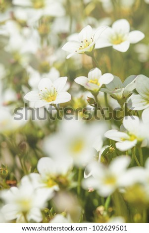 Small beautiful grup of flowers in a spring garden.