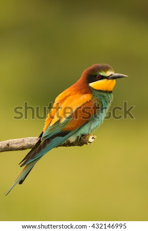 Small bird perched on a branch with a nice plumage - stock photo