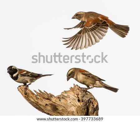 small birds - stock photo