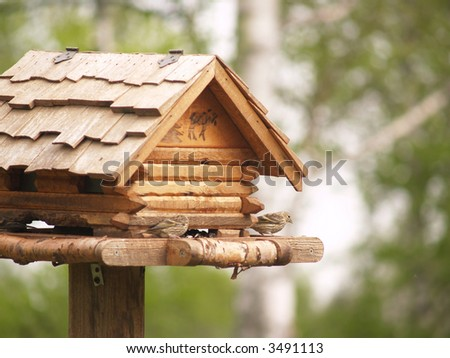 Small Birds in Rustic Bird House with Shallow DOF Forest Background