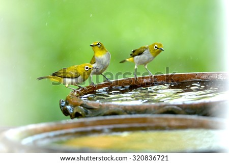 small birds sitting at a birdbath on a summer day