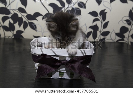 Small black and white cat in basket - stock photo