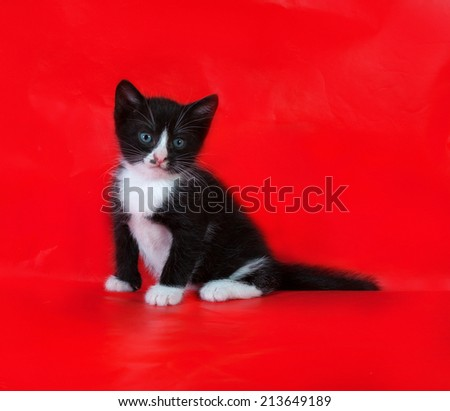 Small black and white kitten sitting on red background