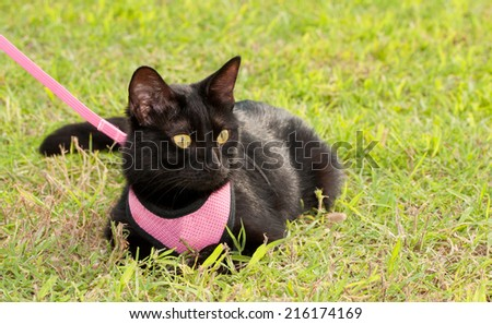 Small black cat wearing pink harness in green grass - stock photo